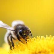 عسل ، خوشمزه ی شفابخش
